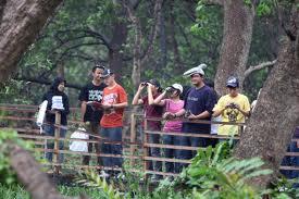 Hutan Bakau Muara Angke